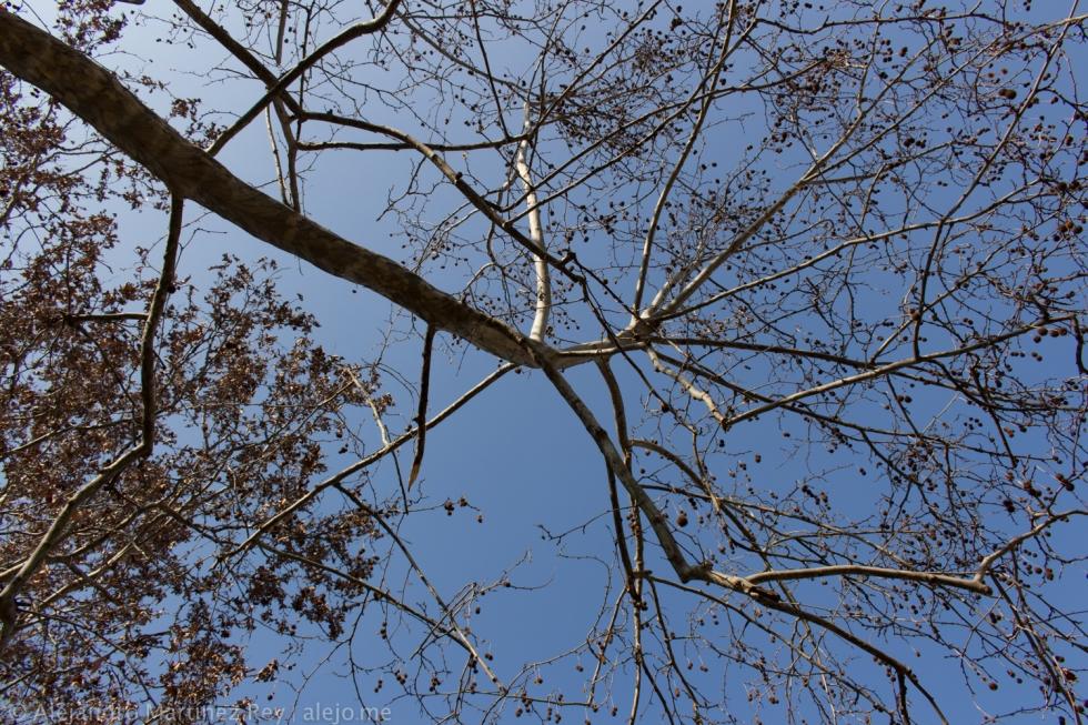 albero-bologna